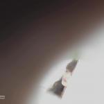 この顔とこの足からの大を・・・【美しい日本の未来 No.123】