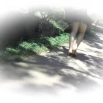 外から追い撮り「大」を押し出す【美しい日本の未来 No.116】